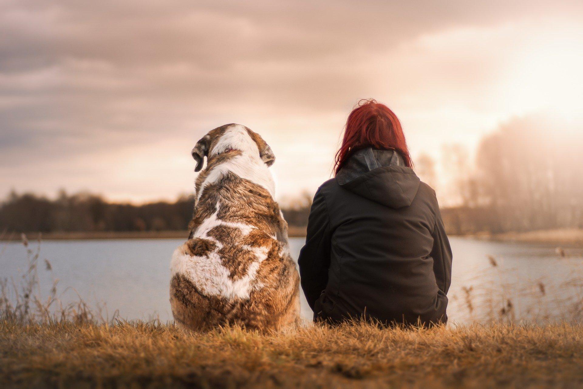 sedící pes
