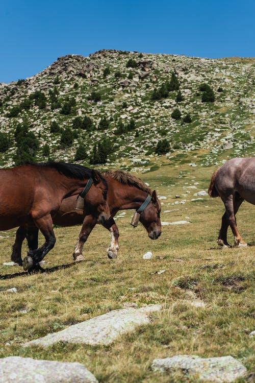 koně hory