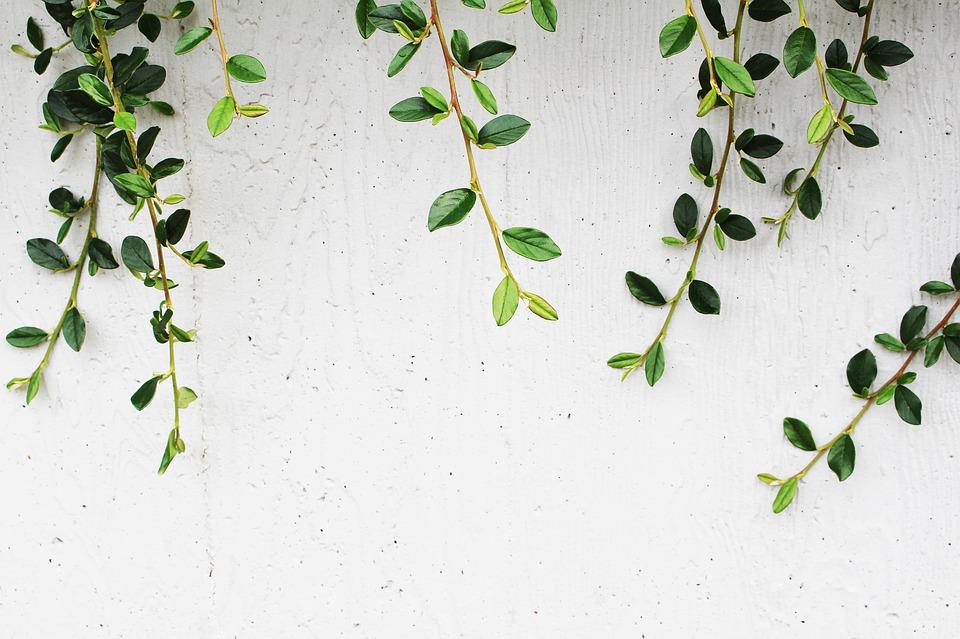 popínavé rostliny na zdi