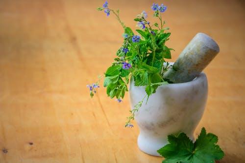 rostliny miska